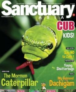 Sanctuary Cub - November 2014
