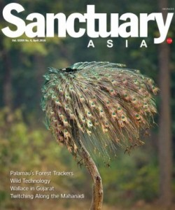 Sanctuary Asia - April 2016