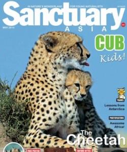Sanctuary Cub - May 2014