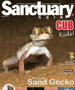 Sanctuary Cub - July 2014
