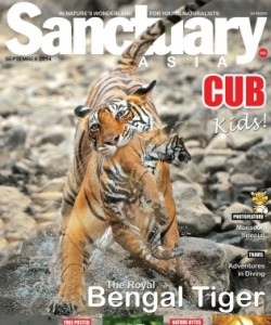 Sanctuary Cub - September 2014