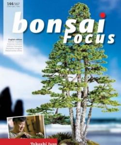 Bonsai Focus EN